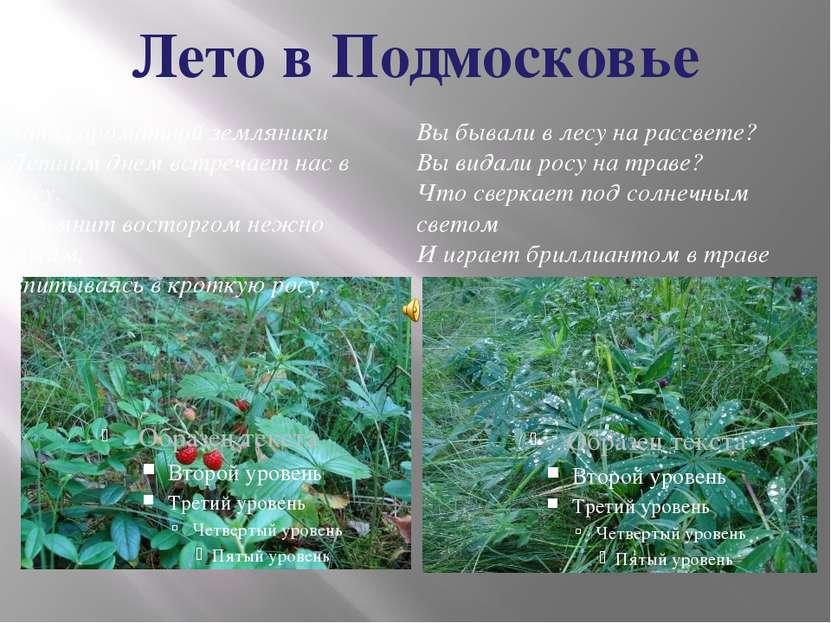 Лето в Подмосковье
