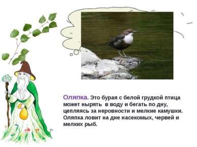Какая птица умеет нырять и бегать по дну? Оляпка. Это бурая с белой грудкой п...