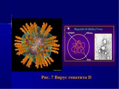 Рис. 7 Вирус гепатита D