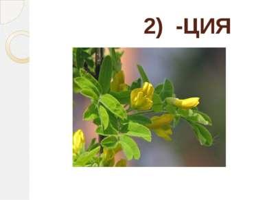 2) -ЦИЯ