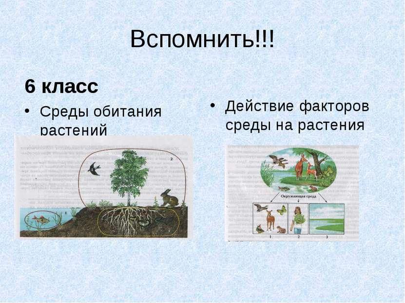 Вспомнить!!! 6 класс Среды обитания растений Действие факторов среды на растения