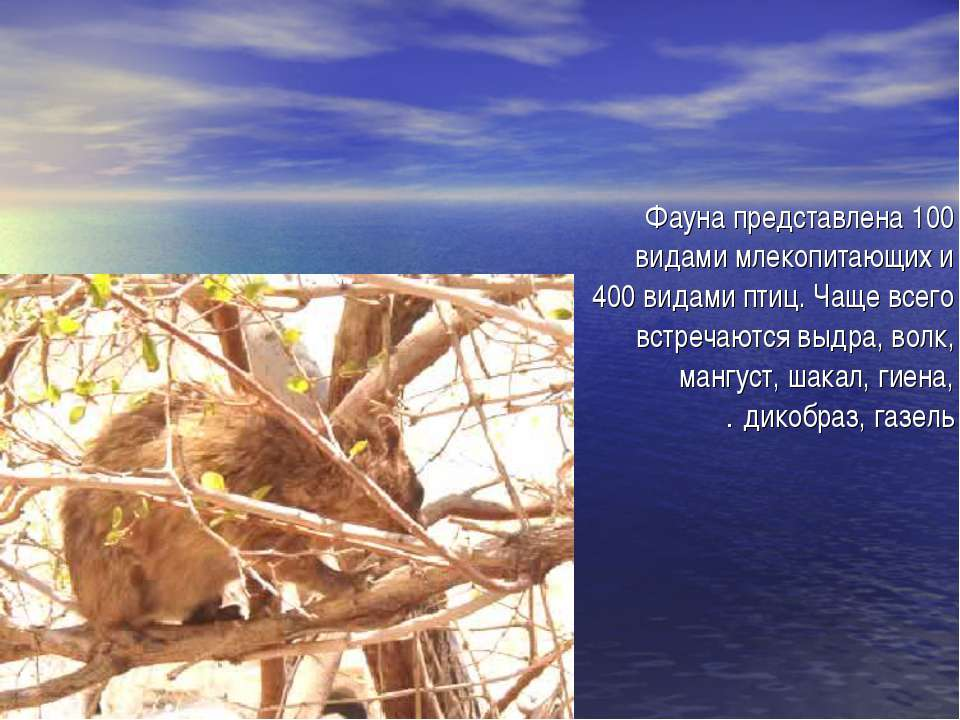 Фауна представлена 100 видами млекопитающих и 400 видами птиц. Чаще всего вст...