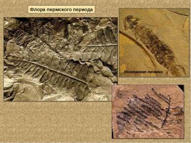 Флора пермского периода Ископаемая личинка