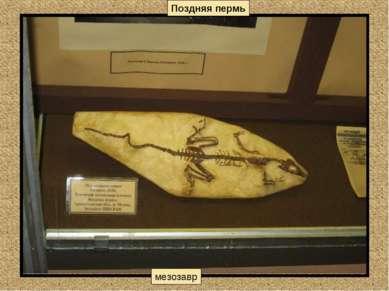 Поздняя пермь мезозавр