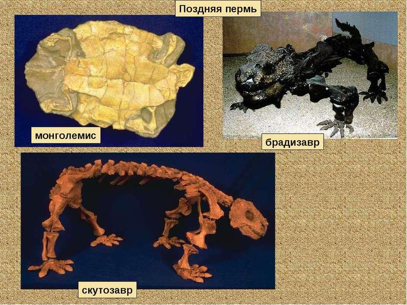скутозавр брадизавр Поздняя пермь монголемис