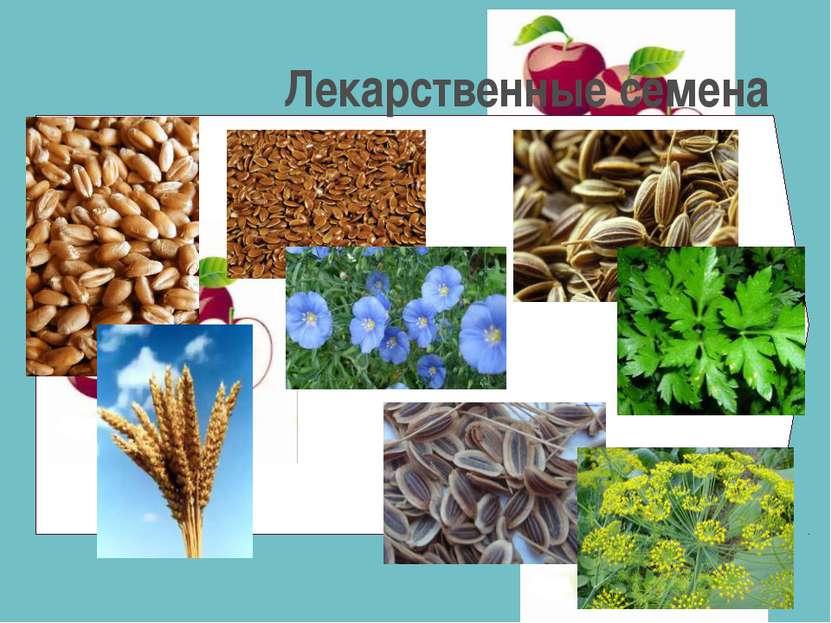 Лекарственные семена