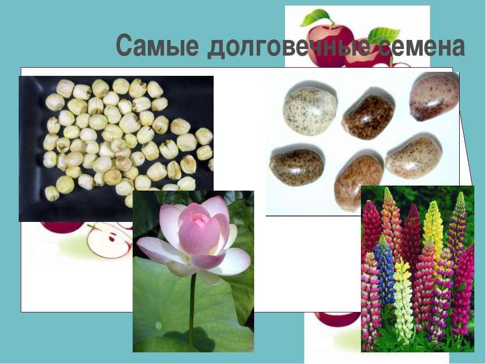 Самые долговечные семена