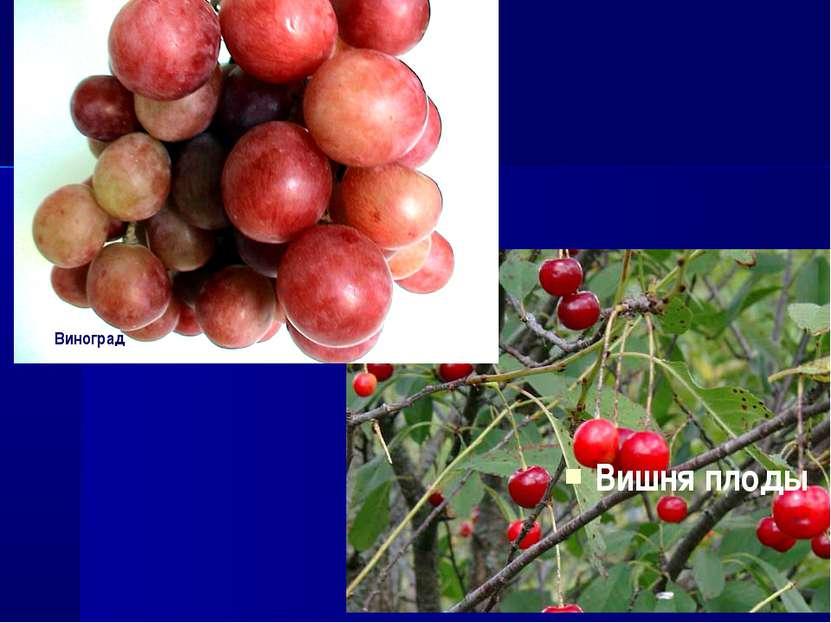 Вишня плоды Виноград