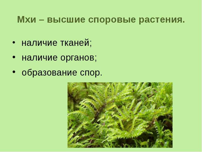 Мхи – высшие споровые растения. наличие тканей; наличие органов; образование ...