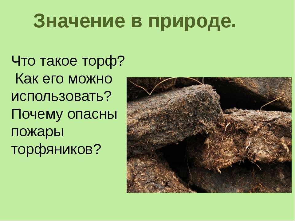 Значение в природе. Что такое торф? Как его можно использовать? Почему опасны...