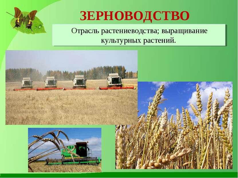 ЗЕРНОВОДСТВО Отрасль растениеводства; выращивание культурных растений.