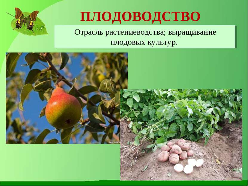 ПЛОДОВОДСТВО Отрасль растениеводства; выращивание плодовых культур.