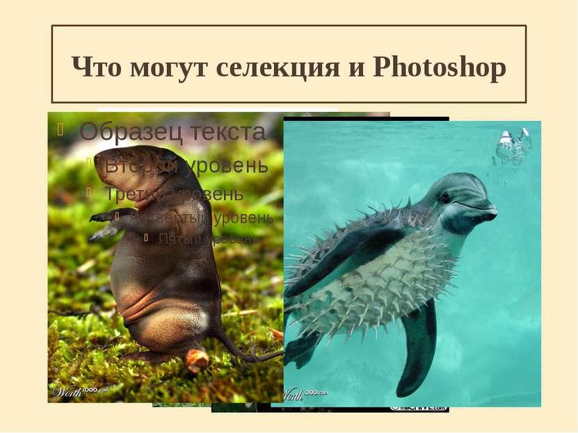 Что могут селекция и Photoshop