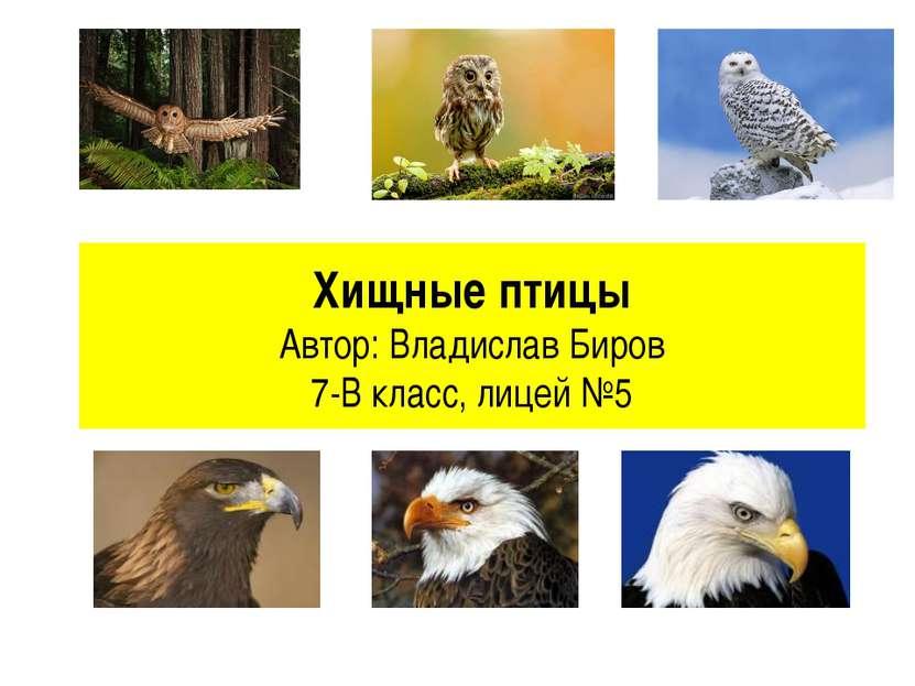 Хищные птицы Автор: Владислав Биров 7-В класс, лицей №5