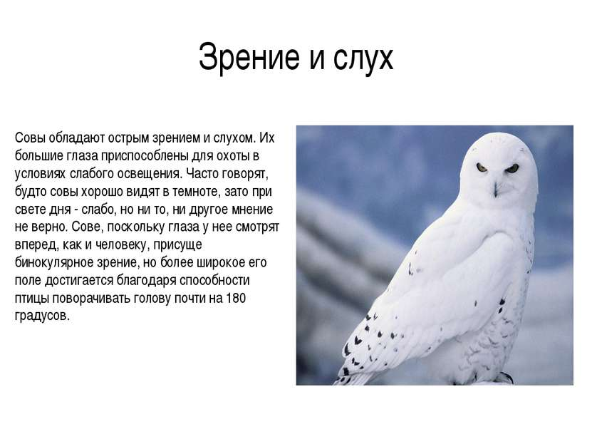 Зрение и слух Совы обладают острым зрением и слухом. Их большие глаза приспос...