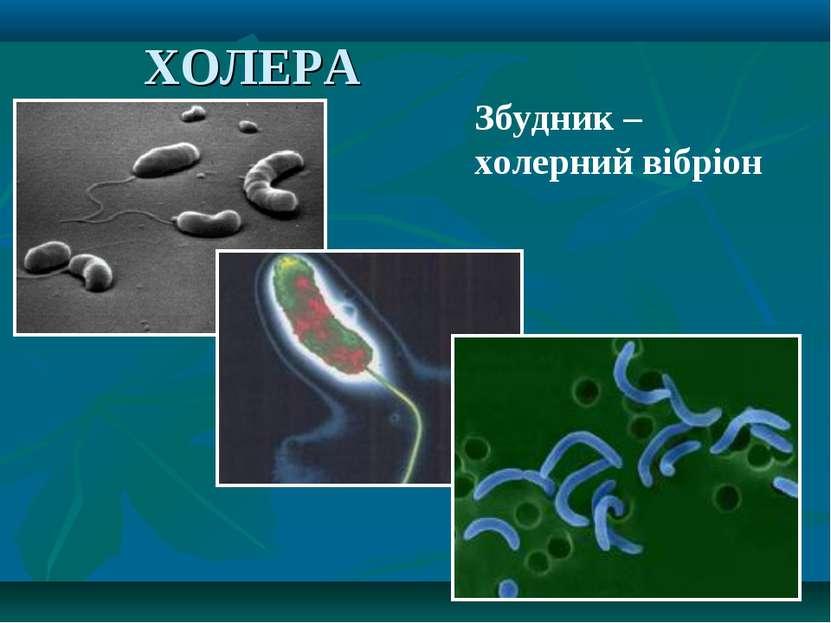 ХОЛЕРА Збудник – холерний вібріон