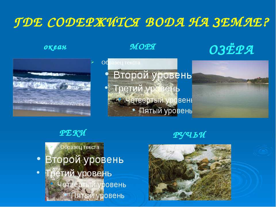 картинки обитатели рек морей океанов
