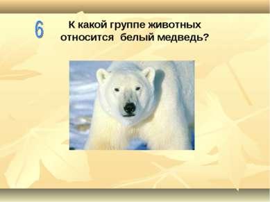 К какой группе животных относится белый медведь?
