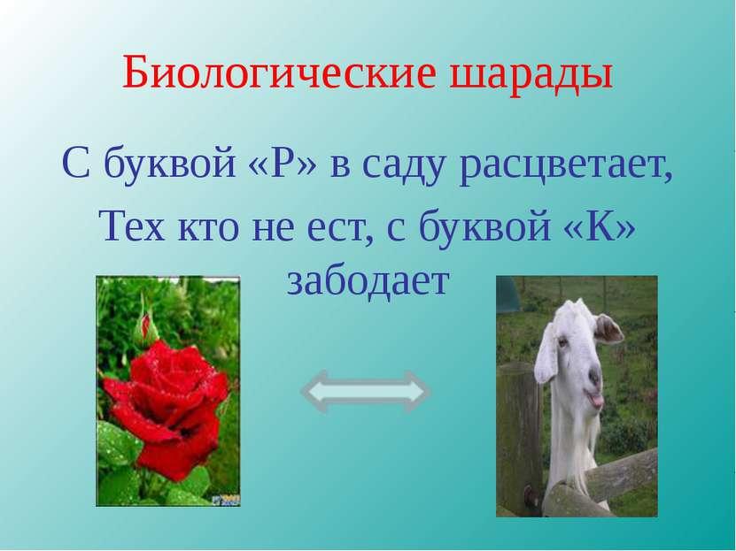 Биологические шарады С буквой «Р» в саду расцветает, Тех кто не ест, с буквой...