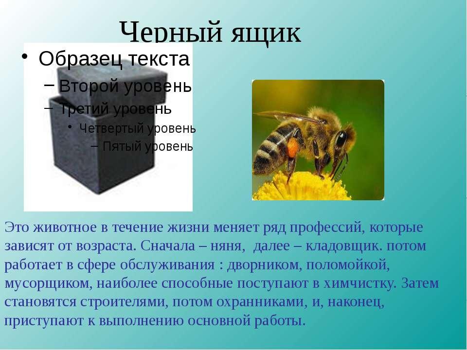 Черный ящик Это животное в течение жизни меняет ряд профессий, которые завися...