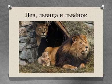 Лев, львица и львёнок