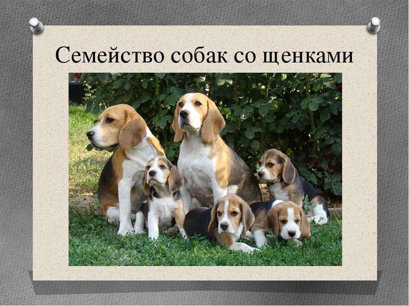 Семейство собак со щенками