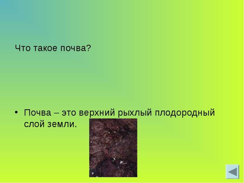 Что такое почва? Почва – это верхний рыхлый плодородный слой земли.