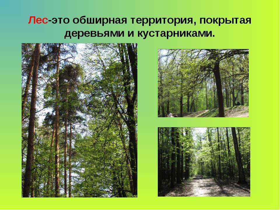 Лес-это обширная территория, покрытая деревьями и кустарниками.