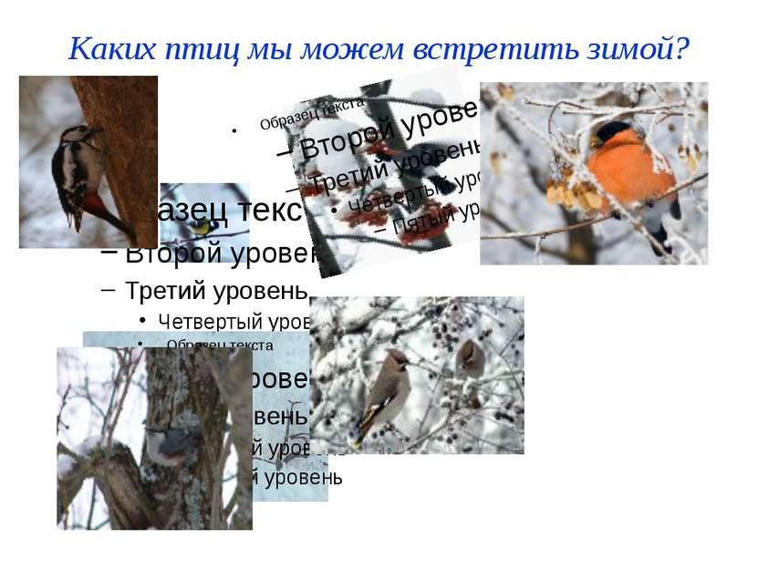 Каких птиц мы можем встретить зимой?