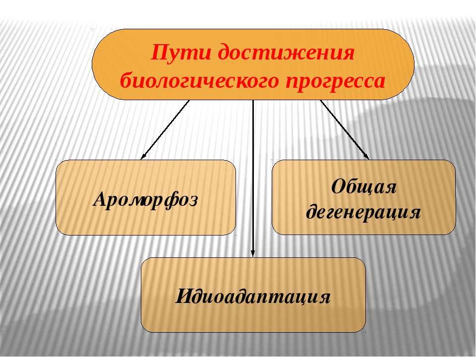 Пути достижения биологического прогресса Ароморфоз Идиоадаптация Общая дегене...