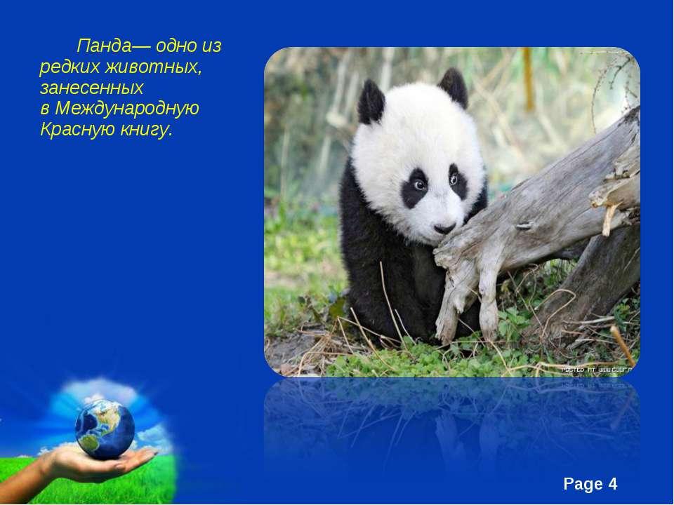 Панда— одно из редких животных, занесенных вМеждународную Красную книгу. Fre...