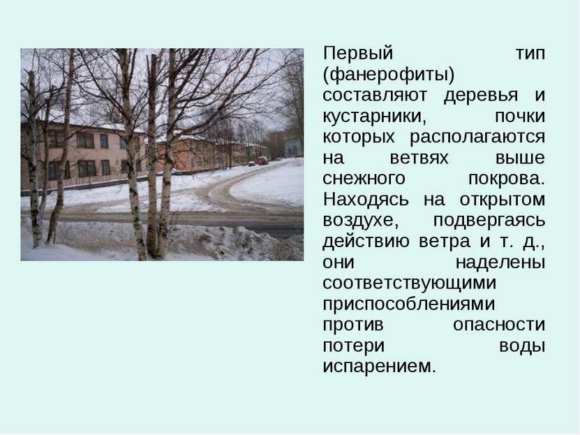 Первый тип (фанерофиты) составляют деревья и кустарники, почки которых распол...