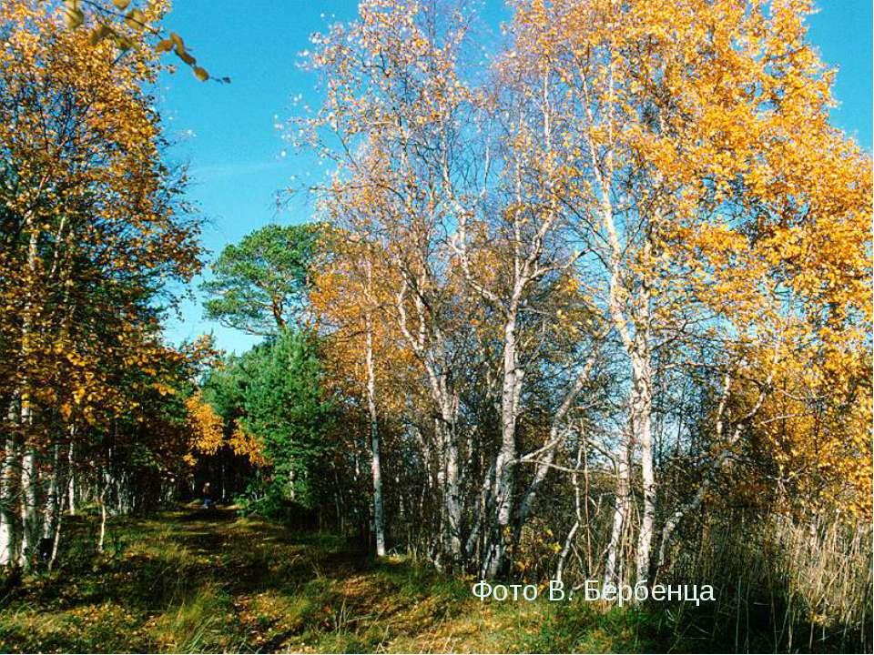 Фото В. Бербенца