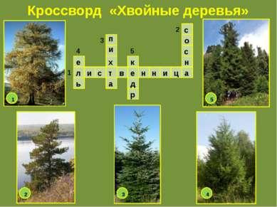 Кроссворд «Хвойные деревья» л и с т в е н н и ц а е ь п и х а к д р с о с н 1...