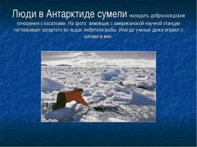 Люди в Антарктиде сумели наладить добрососедские отношения с касатками. На фо...