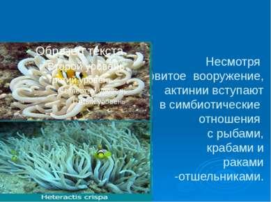 Несмотря на ядовитое вооружение, актинии вступают в симбиотические отношения ...