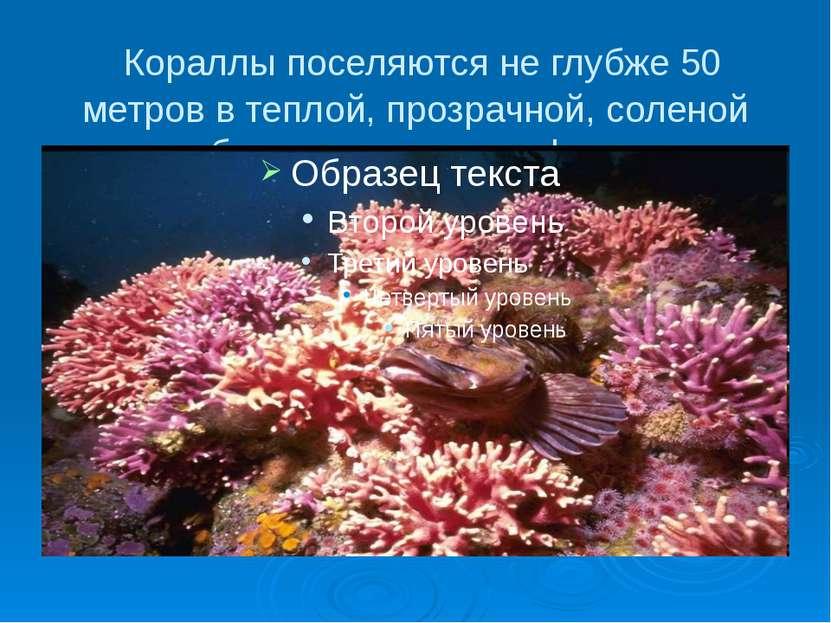 Кораллы поселяются не глубже 50 метров в теплой, прозрачной, соленой воде, об...
