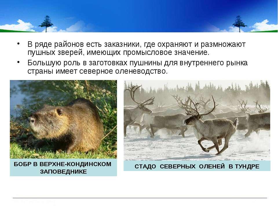 В ряде районов есть заказники, где охраняют и размножают пушных зверей, имеющ...