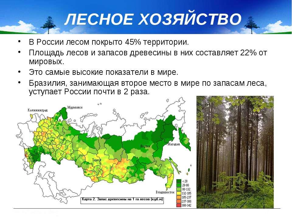 ЛЕСНОЕ ХОЗЯЙСТВО В России лесом покрыто 45% территории. Площадь лесов и запас...