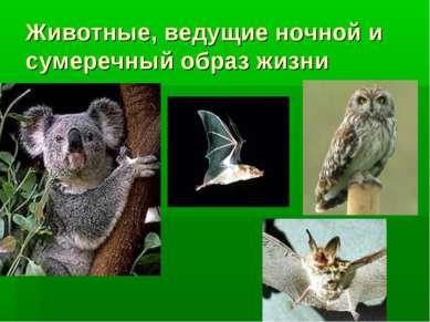 Животные, ведущие ночной и сумеречный образ жизни