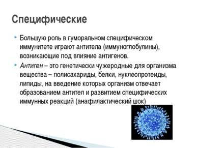 Большую роль в гуморальном специфическом иммунитете играют антитела (иммуногл...