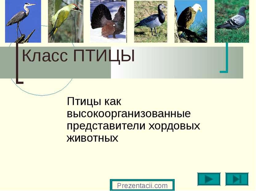 Класс ПТИЦЫ Птицы как высокоорганизованные представители хордовых животных Pr...