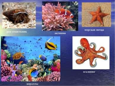 рак-отшельник морская звезда актинии осьминог кораллы
