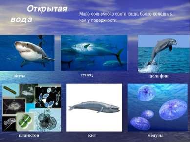 акула тунец дельфин планктон медузы кит Открытая вода Мало солнечного света; ...