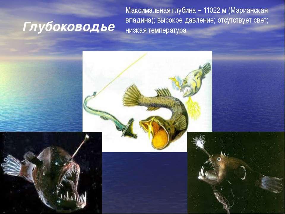 Глубоководье Максимальная глубина – 11022 м (Марианская впадина); высокое дав...