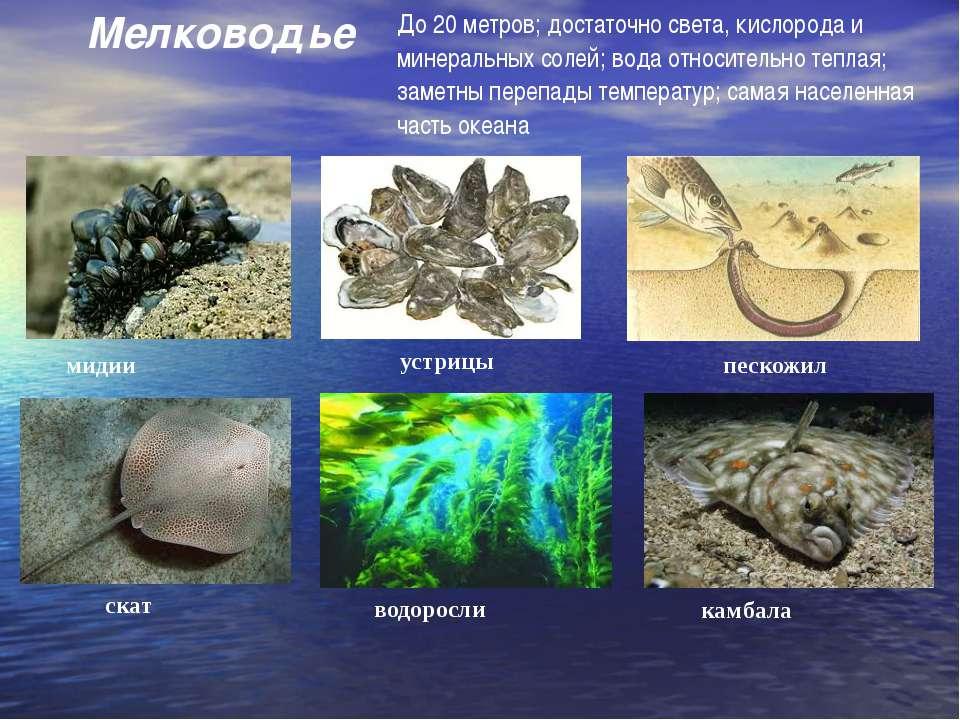 мидии устрицы пескожил скат водоросли камбала Мелководье До 20 метров; достат...