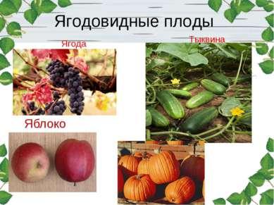Яблоко Ягодовидные плоды Тыквина Ягода