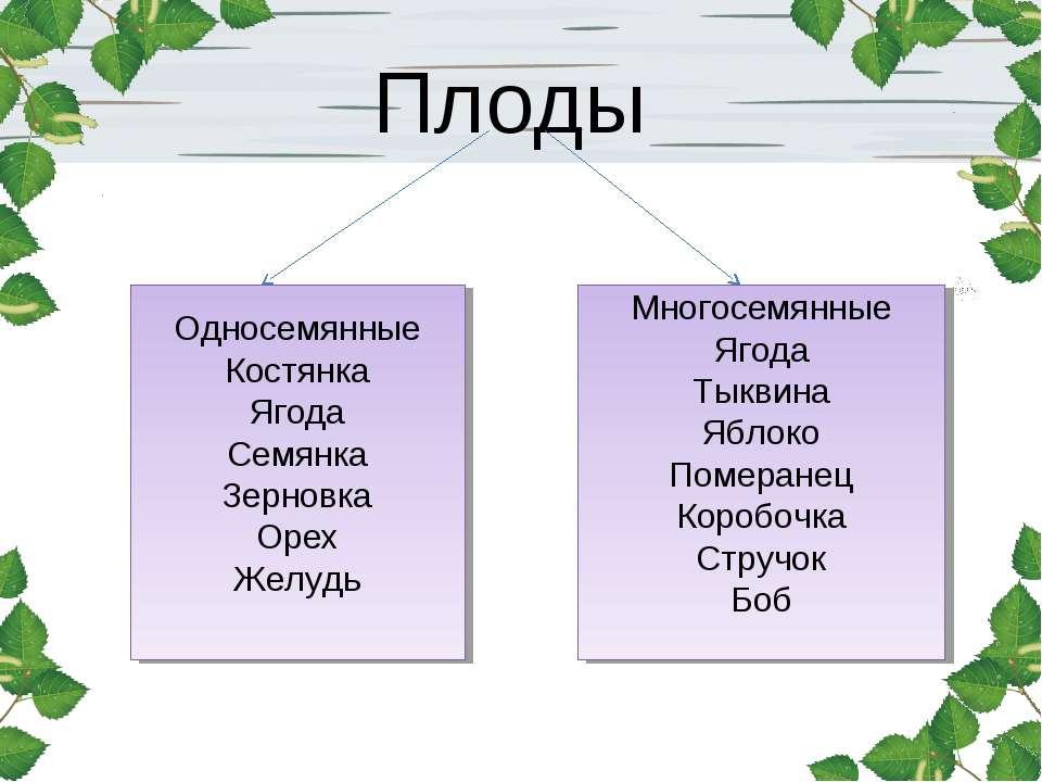 Плоды Односемянные Костянка Ягода Семянка Зерновка Орех Желудь Многосемянные ...