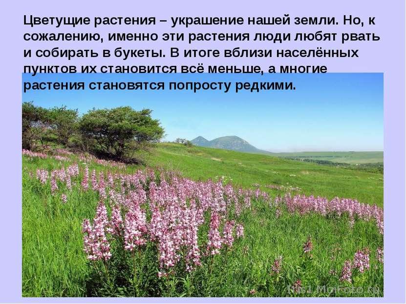 Цветущие растения – украшение нашей земли. Но, к сожалению, именно эти растен...