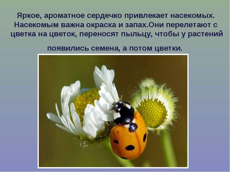 Яркое, ароматное сердечко привлекает насекомых. Насекомым важна окраска и зап...